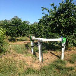 Drip irrigation Orchard